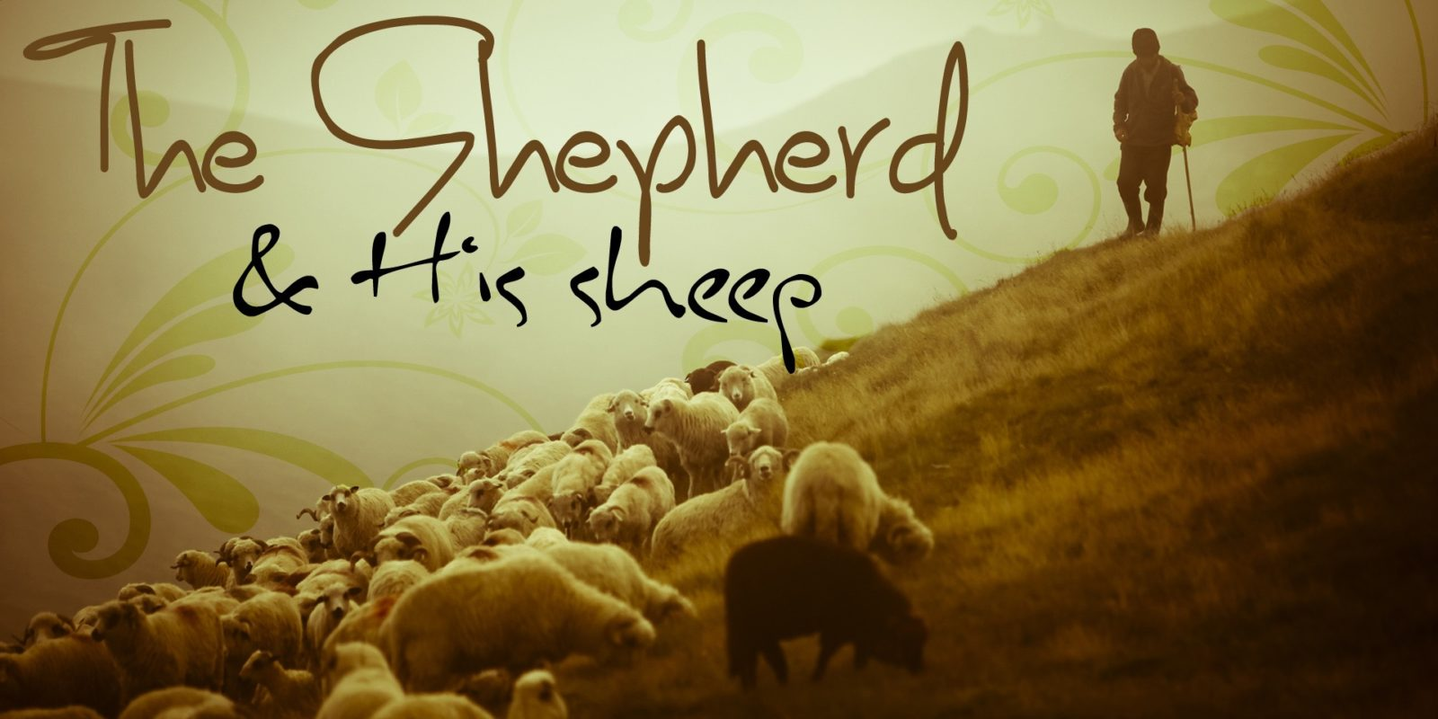 Current Series: The Shepherd and His Sheep
